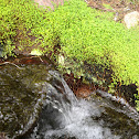 Moss with waterfall
