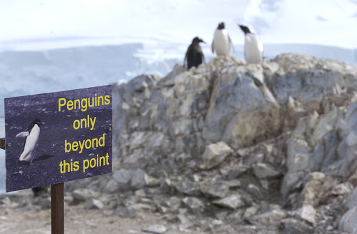 182d2PenguinsOnly - A nice way of telling passengers to keep their distance.