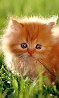 Screenshot of Phiphou Cat