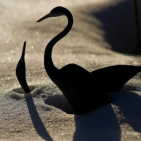 Drowned in the Snow by Beth Phifer - Artistic Objects Other Objects ( bronze, statue, nature, struggle, shadow, snow, birds )