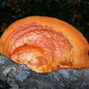 Cinnabar Polypore