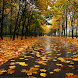 Autumn Sidewalk Live Wallpaper