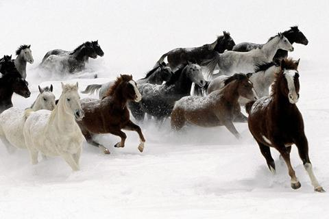 Horses Jigsaw Puzzles- screenshot