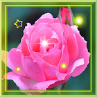 Pink Rose Love live Wallpaper icon