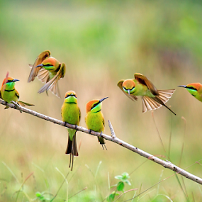 You guys late by Thảo Nguyễn Đắc - Animals Birds ( bird, dancing, fly )