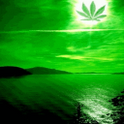 Weed Paradise Live Wallpaper icon