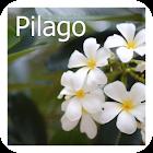 Pilago icon