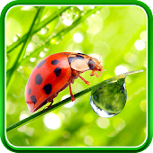 Macro Photos Live Wallpaper