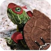 Slot Ninja & Turtle