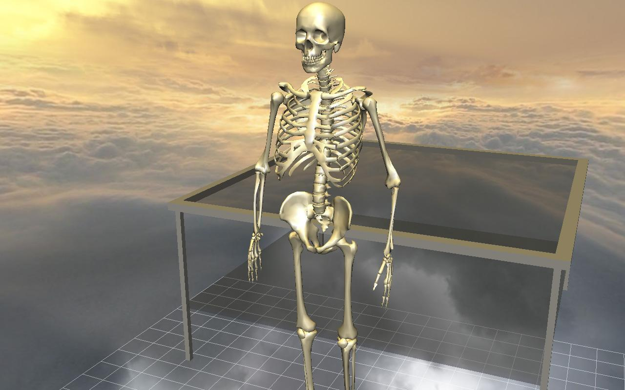 Body Disassembly 3D- screenshot