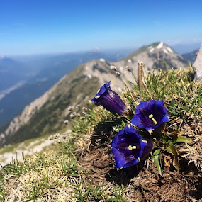 by Tina K - Instagram & Mobile iPhone ( nofilter, gorenjska, naturestylesgf, hiking, mountains, nature, iphoneonly, outdoors, active, view, flowers, stol, karavanke )