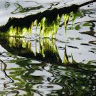 Macro-algae, hair algae