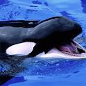 Whale Live Wallpaper icon
