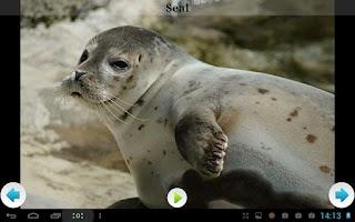 Screenshot of Best Arctic Animals Sounds