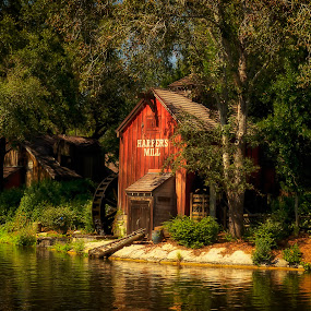 by Linda Tiepelman - Landscapes Forests ( walt disney world, theme park, tourism, lake, trick or treat, street scene, halloween, tourist, harpers mill, florida, magic kingdom, orlando, halloween festivities, photo journalism )