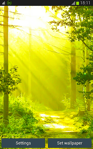 Green Forest Wallpapers App