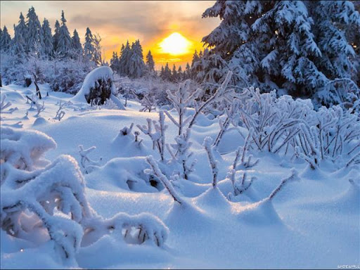 Download Winter Live Wallpaper For PC