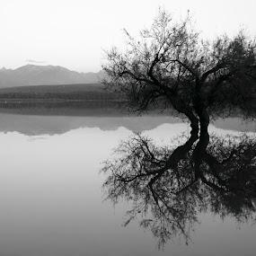 by Cornelis Cornelissen - Black & White Landscapes