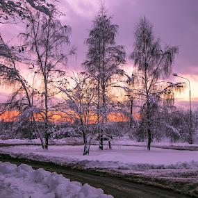 Rano v meste by Ján Hrmo - City,  Street & Park  Street Scenes ( sneh, zima, mesto, stromy, ulica )