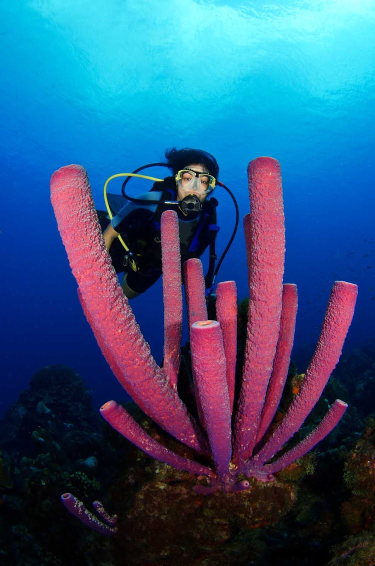 A diver in Curacao with tube sponges — did you know that they're animals, not plants?