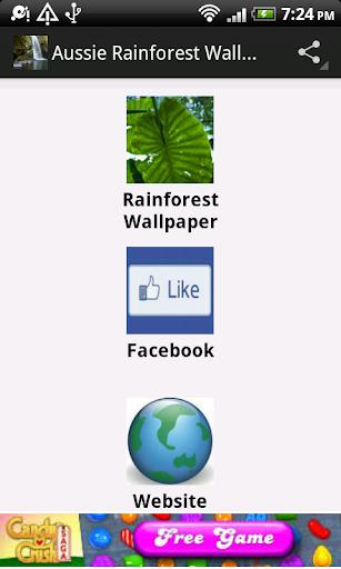 Aussie Rainforest Wallpaper