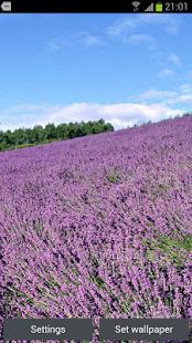 Lavender 3D Live Wallpaper