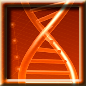 DNA Model LWP