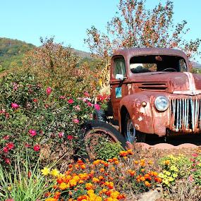 by Crissy Barnes Blanton - Transportation Automobiles