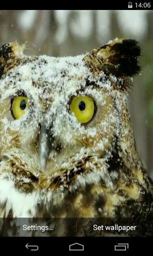 Owl Video Live Wallpaper