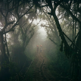 Long Road Home by Rah Juan - Instagram & Mobile iPhone ( nature, fog, forest, balinaturalphotoworks, rahjuan,  )