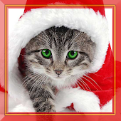 Xmas Kitty Live Wallpaper