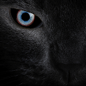 Black cat eyes live wallpaper icon