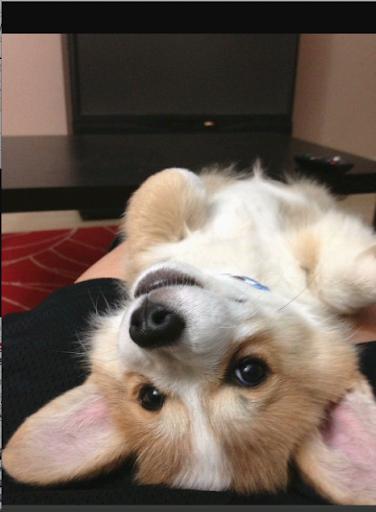 玩攝影App|Mascotea.Me, lindas mascotas!免費|APP試玩