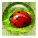 Free Memory/Match Game for Kid logo