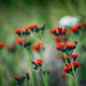 Impression by Bogdan Blaga - Flowers Flowers in the Wild