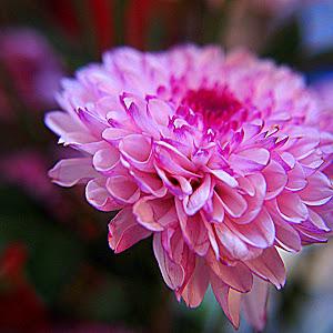Bunga15e.jpg