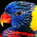 3D colorful bird logo
