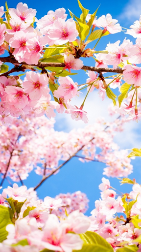 cherry chat download