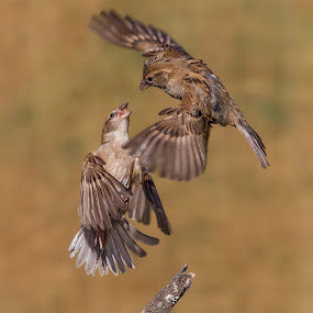 by Francois Loubser - Animals Birds
