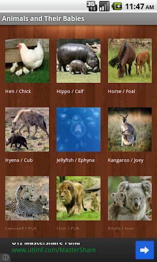 Identify Animal Babies Names
