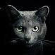 Find a Cat image