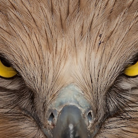 I m Angry by Nikos Pa - Animals Birds ( snake eagle )
