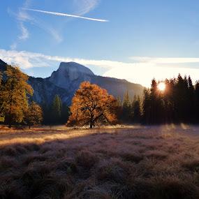Sunrise Standout by Brendan Mcmenamy - Novices Only Landscapes ( dope, nature, yosemite, sunrise, hiking )