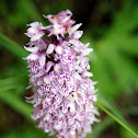 Moorland Spotted Orchid