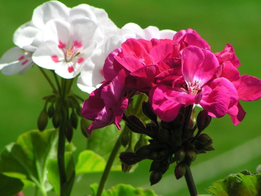by Lenah Jönsson - Flowers Single Flower