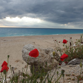 Beach flowers by Pipia Kanjeva - Landscapes Beaches ( #beach #flower #blossom #clouds #storm,  )