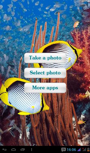 Aquarium Transparant Photo