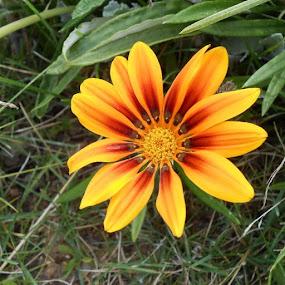 by Joao Sousa - Flowers Single Flower ( flowers )