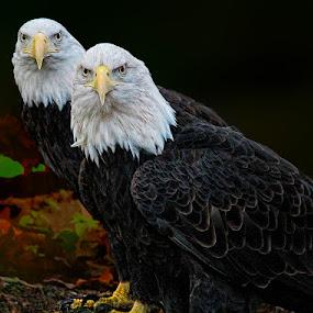 Double Vision by John Larson - Animals Birds
