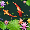 3D Fish Ponds Live Wallpaper icon